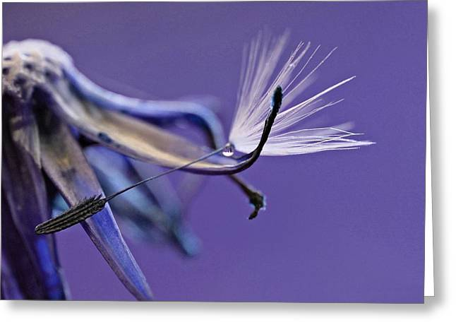 Wishes Greeting Cards - Never let go of your dreams Greeting Card by David Thornton