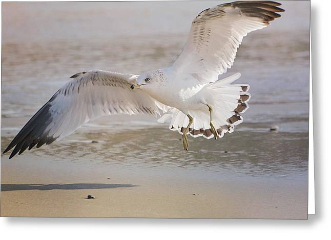 Seagull On Beach Greeting Cards - New Day Begins Greeting Card by Fraida Gutovich