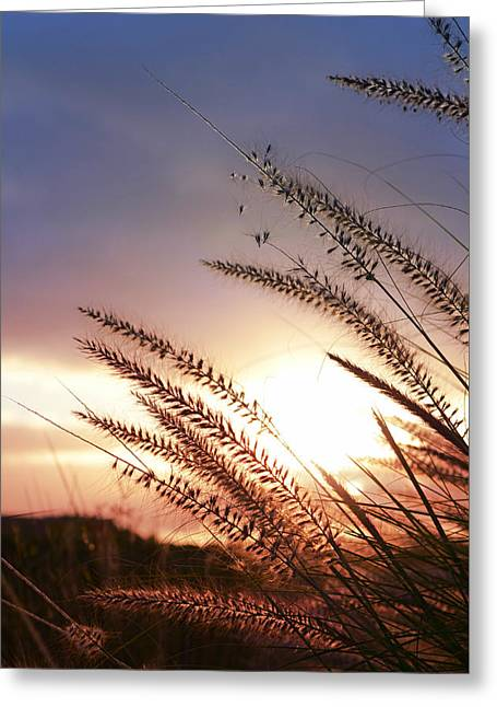 New Day Greeting Card by Laura Fasulo