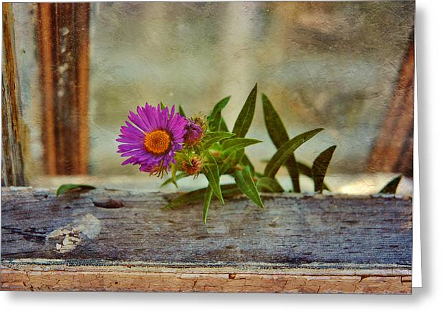 Aster Mixed Media Greeting Cards - New England Aster 3 Greeting Card by Todd and candice Dailey