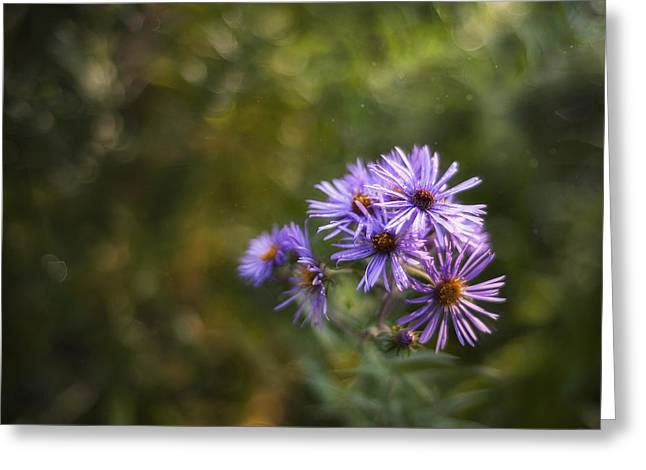 Flower Fine Art Photography Greeting Cards - New England Asters Greeting Card by Scott Norris