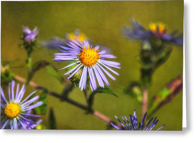 Symphyotrichum Novae-angliae Greeting Cards - New England Asters Greeting Card by Susan Capuano