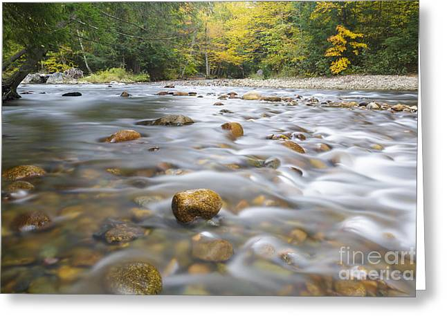 Fall River Scenes Greeting Cards - Gale River - Franconia New Hampshire  Greeting Card by Erin Paul Donovan