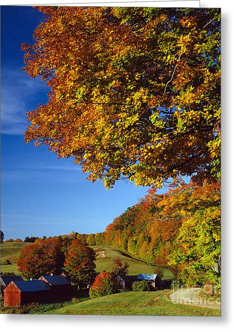 Turning Leaves Greeting Cards - New England Autumn Greeting Card by Rafael Macia
