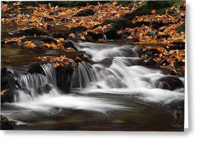 Vermont Photographs Greeting Cards - New England Fall Foliage and Waterfall Cascades Greeting Card by Juergen Roth