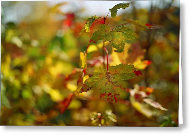 Fall Photos Greeting Cards - New England Fall on Film Greeting Card by Linda Unger