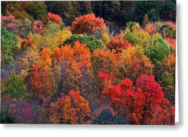 New England Autumn Greeting Cards - New England Foliage Burst Greeting Card by Thomas Schoeller