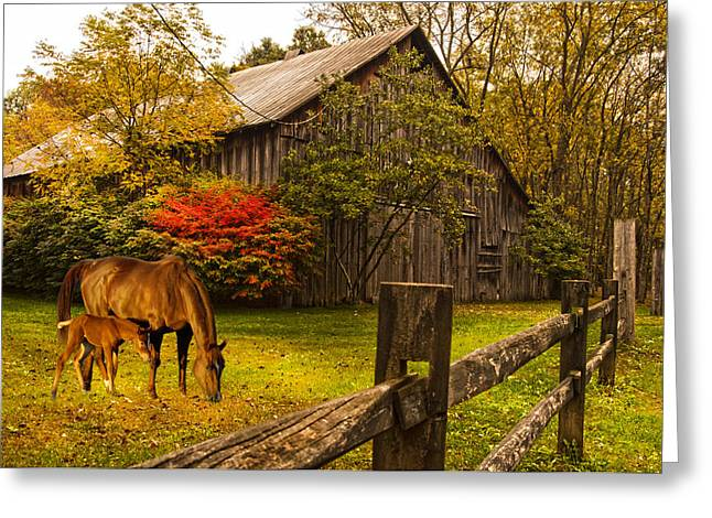 Old Home Place Greeting Cards - New Foal Old Home Place Greeting Card by Randall Branham