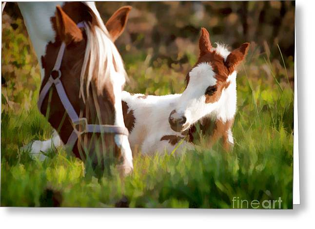 Breeds Greeting Cards - New foal resting in the sun Greeting Card by Tim Dahl