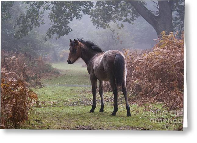 New Forest Pony Greeting Card by Dave Pressland FLPA