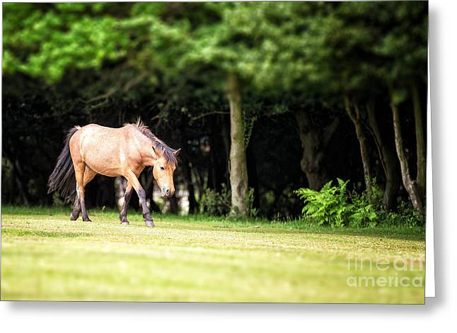 Equus Greeting Cards - New Forest pony Greeting Card by Jane Rix