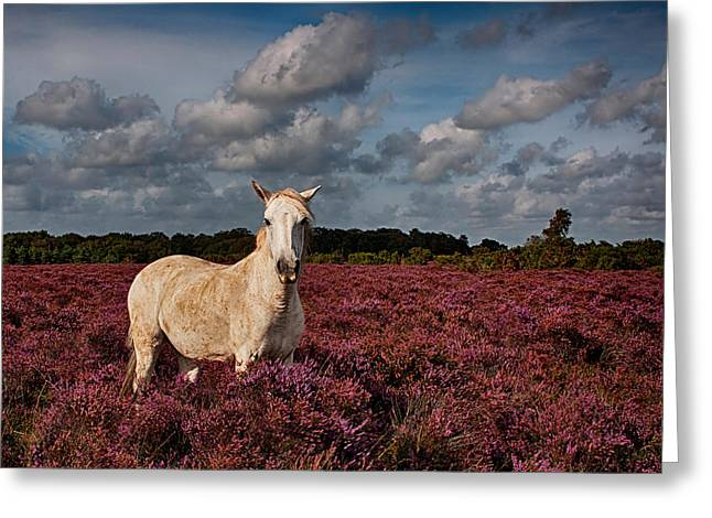 New Forest Pony Greeting Cards - New Forest Pony Greeting Card by Phil Clements