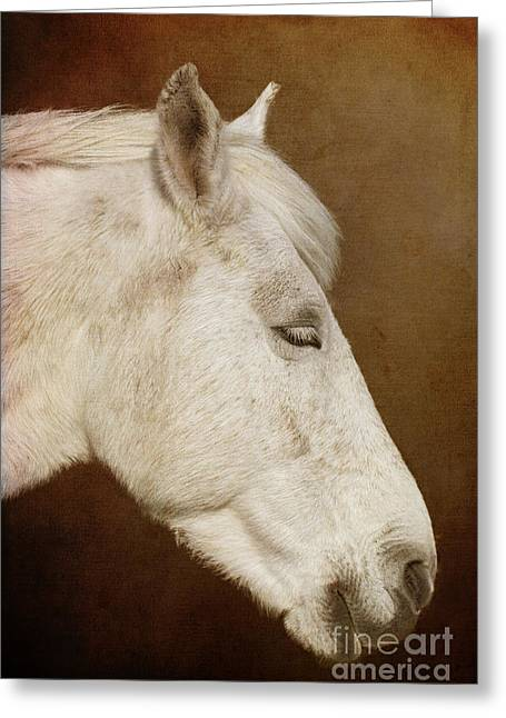 Terri Waters Greeting Cards - New Forest Pony Greeting Card by Terri  Waters
