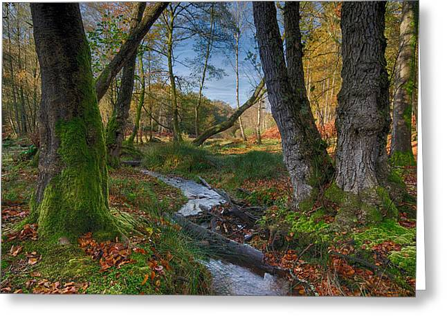 Moss Green Greeting Cards - New forest Stream Greeting Card by Helen Hotson