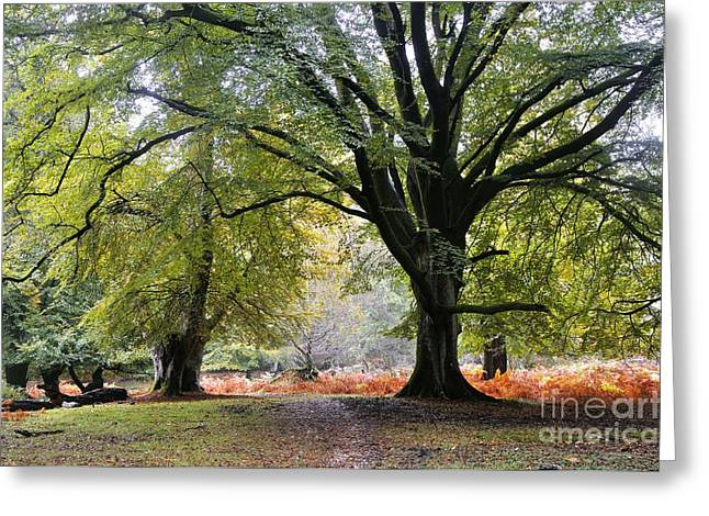 New Britain Greeting Cards - New Forest, Uk Greeting Card by Colin Varndell