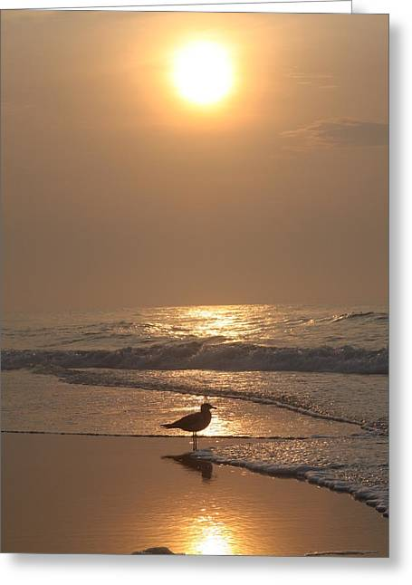 Original Photographs Greeting Cards - New Jersey Sunrise Greeting Card by Vadim Levin