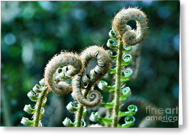 Determination Photographs Greeting Cards - New Life Greeting Card by Cheryl Young