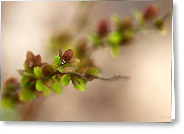 Fresh Green Greeting Cards - New Life Greeting Card by Christina Rollo