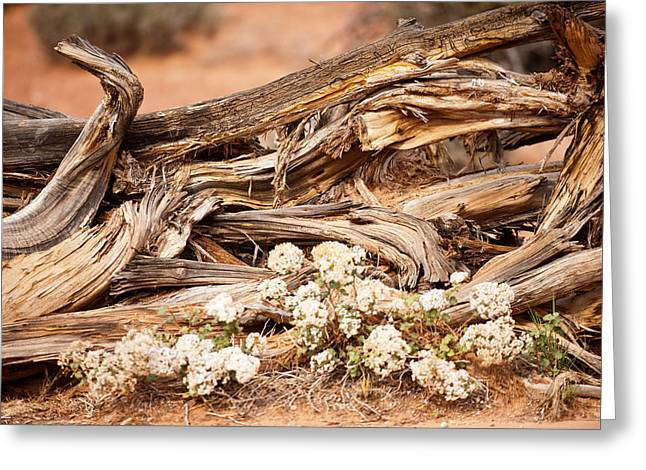 New Life Grows Greeting Card by Randy Giesbrecht