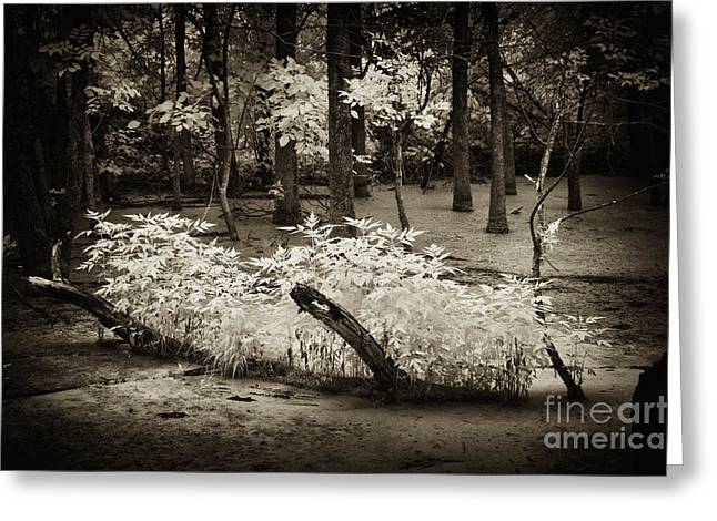 Ir Greeting Cards - New Life Greeting Card by Paul W Faust -  Impressions of Light