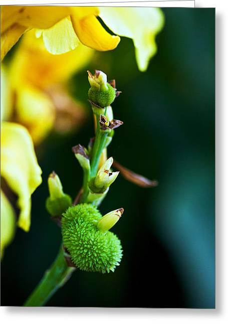 Beautiful Winter Willow Tree  Yellow Greeting Cards - New Life  Greeting Card by Sennie Pierson
