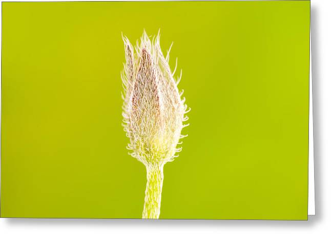 New Life Greeting Card by Wim Lanclus