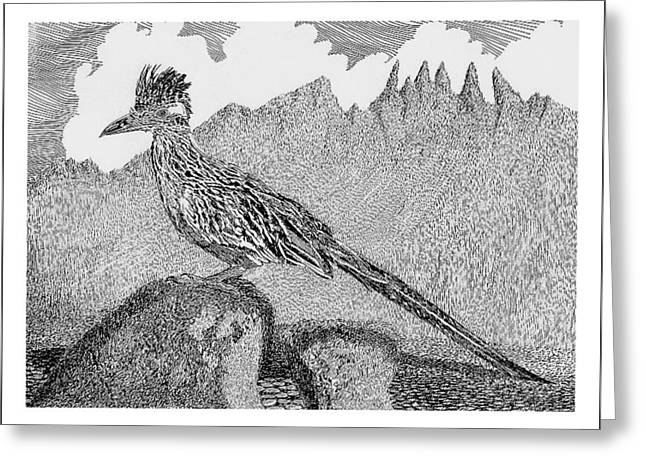 Pen And Ink Framed Prints Greeting Cards - New Mexico Roadrunner Greeting Card by Jack Pumphrey