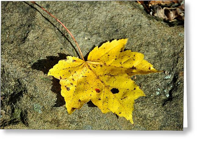 Red Fallen Leave Photographs Greeting Cards - New Moon Greeting Card by JAMART Photography