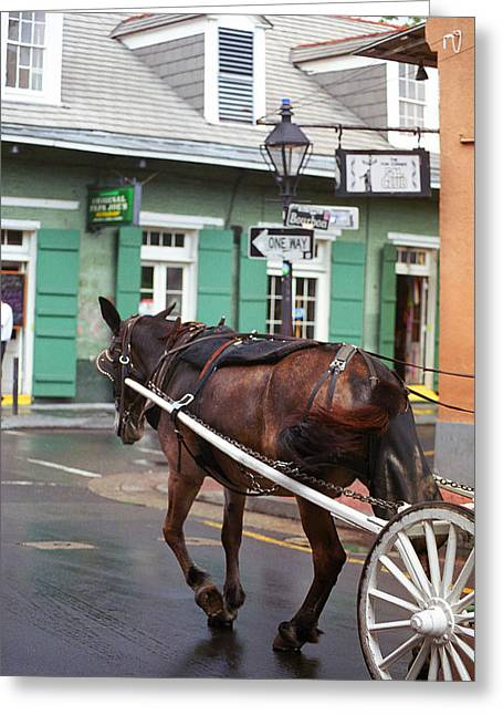 New Orleans Louisiana Framed Prints Greeting Cards - New Orleans - Bourbon Street Horse Greeting Card by Frank Romeo