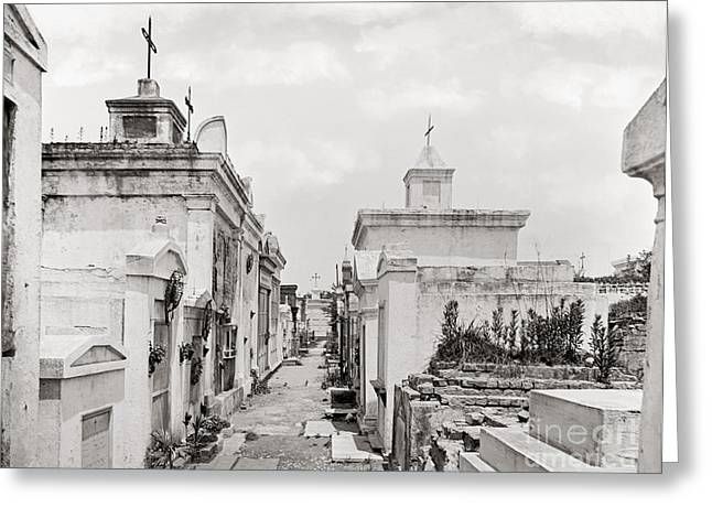 1901 Greeting Cards - New Orleans: Cemetery Greeting Card by Granger