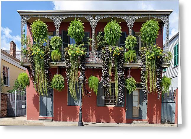 Ornamental Plants Greeting Cards - New Orleans City Jungle Greeting Card by Christine Till