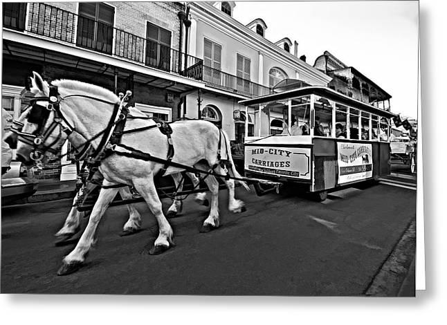 Quarter Horse Greeting Cards - New Orleans Cortege  Greeting Card by Steve Harrington
