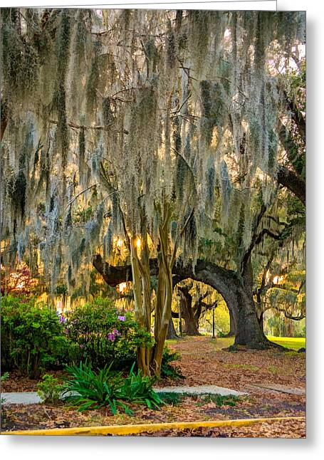 Jogger Greeting Cards - New Orleans - Spanish Moss Greeting Card by Steve Harrington