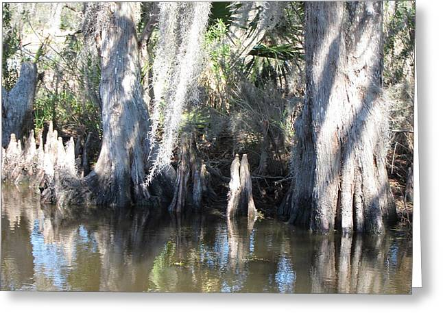 Las Greeting Cards - New Orleans - Swamp Boat Ride - 1212105 Greeting Card by DC Photographer