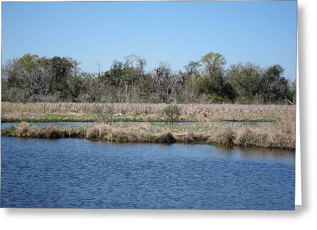 Swamp Greeting Cards - New Orleans - Swamp Boat Ride - 1212118 Greeting Card by DC Photographer
