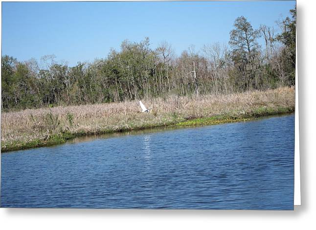 Ride Greeting Cards - New Orleans - Swamp Boat Ride - 1212119 Greeting Card by DC Photographer
