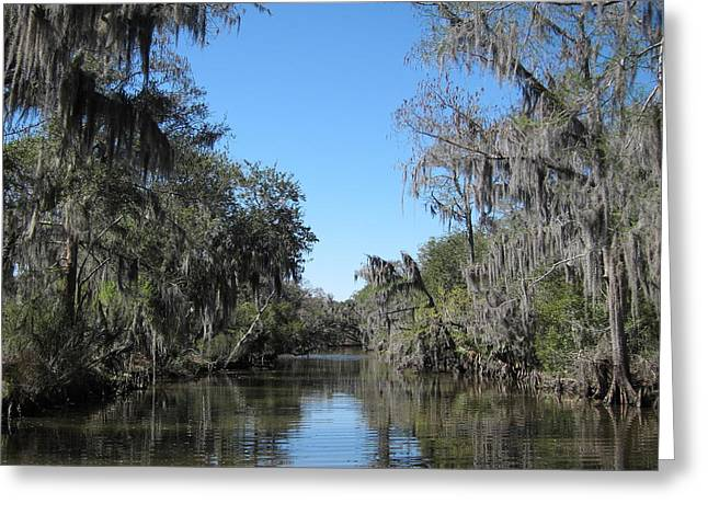 Swamp Greeting Cards - New Orleans - Swamp Boat Ride - 1212126 Greeting Card by DC Photographer
