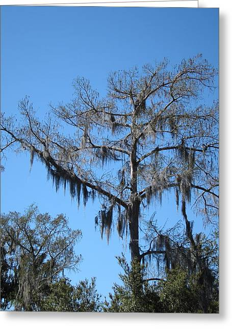 La Greeting Cards - New Orleans - Swamp Boat Ride - 1212131 Greeting Card by DC Photographer