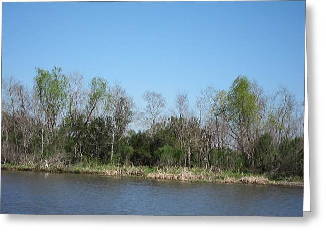 Boat Greeting Cards - New Orleans - Swamp Boat Ride - 1212161 Greeting Card by DC Photographer