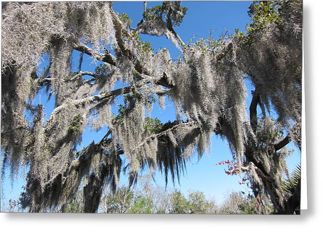 Rides Greeting Cards - New Orleans - Swamp Boat Ride - 121238 Greeting Card by DC Photographer