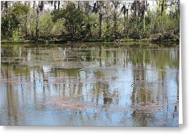 La Greeting Cards - New Orleans - Swamp Boat Ride - 121247 Greeting Card by DC Photographer
