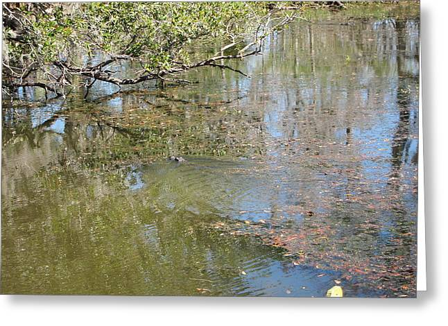 Swamps Greeting Cards - New Orleans - Swamp Boat Ride - 121248 Greeting Card by DC Photographer