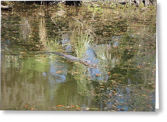 Rides Greeting Cards - New Orleans - Swamp Boat Ride - 121252 Greeting Card by DC Photographer