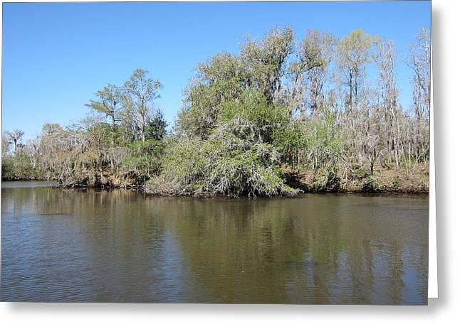 Swamp Greeting Cards - New Orleans - Swamp Boat Ride - 121266 Greeting Card by DC Photographer