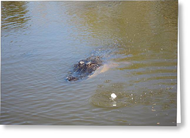 Swamps Greeting Cards - New Orleans - Swamp Boat Ride - 121283 Greeting Card by DC Photographer