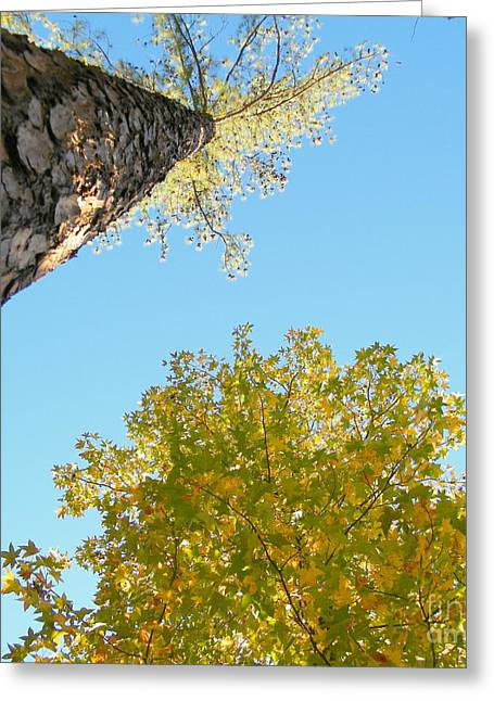 New Perspective On Autumn Leaves Greeting Card by Cheryl Hardt Art