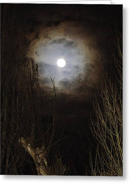 Eerie Greeting Cards - NEW Photographic Art Print For Sale   Dark Night Full Moon Through Trees Greeting Card by Toula Mavridou-Messer