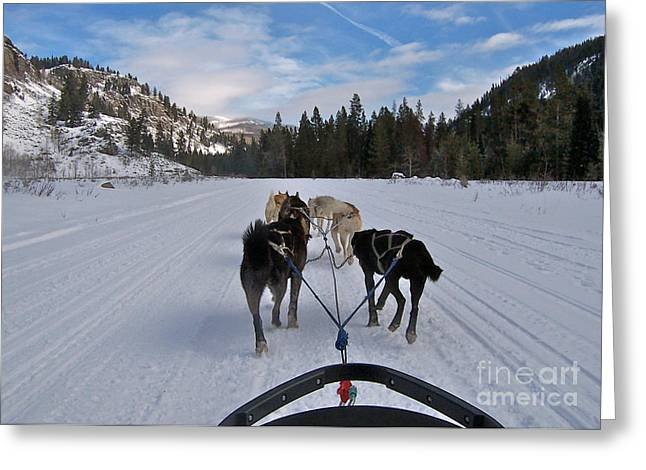Action Ski Art Greeting Cards - NEW Photographic Art Print For Sale Riding Through The Snow Greeting Card by Toula Mavridou-Messer