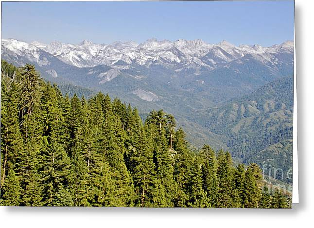 New Photographic Art Print For Sale View Of Sequoia National Park Greeting Card by Toula Mavridou-Messer