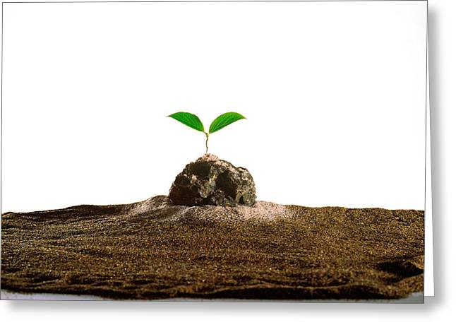 Digitally Altered Greeting Cards - New Plant Growing On Sand Against White Greeting Card by Panoramic Images